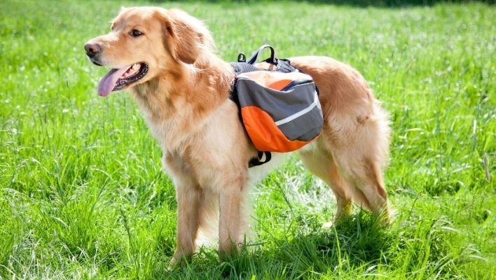 Klövjeväska för hund - 8 bästa klövjeväskorna 2021