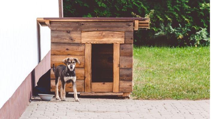 Bästa Hundkoja 2021 - Stort Test av Hundkojor