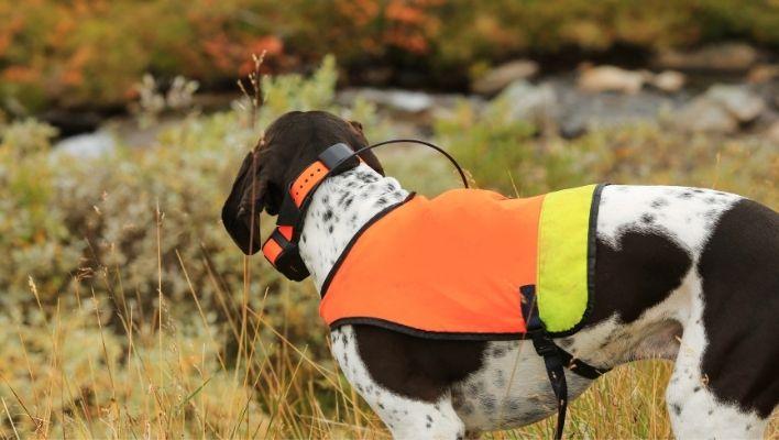 Bästa GPS Tracker till Hund 2021 - Stort Test av GPS Halsband