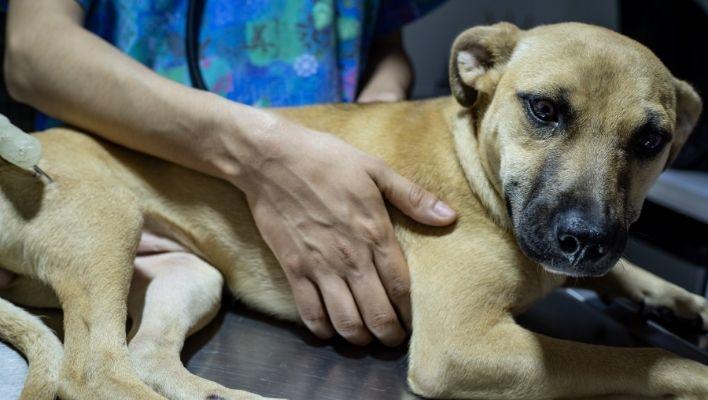 Bästa Probiotika till Hund 2021 - Stort Test av Probiotika