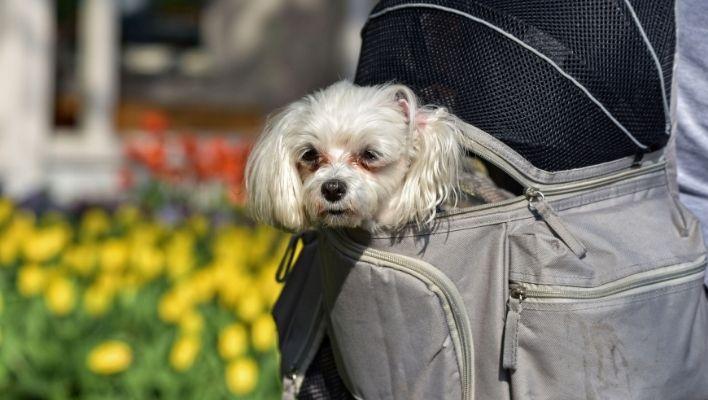 Bästa Hundryggsäck 2021 - Stort Test av Ryggsäck för Hund