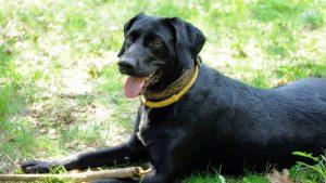 Bästa Fästinghalsband för Hund 2021 - Stort Test av Fästinghalsband