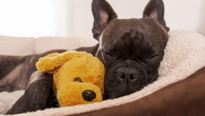Bästa Hundbädd & Hundsäng 2021 - Bäst i Test & Köpguide