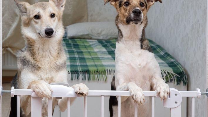 Bästa Hundgrind 2021 - Stort Test av Hundgrindar
