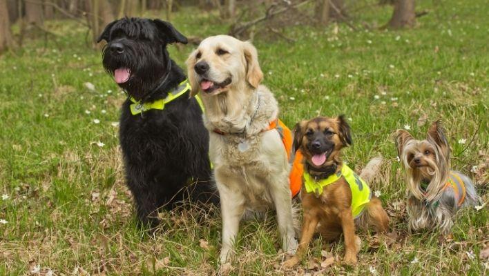 Bästa Reflexväst för Hund 2021 - Stort Test av Reflexvästar