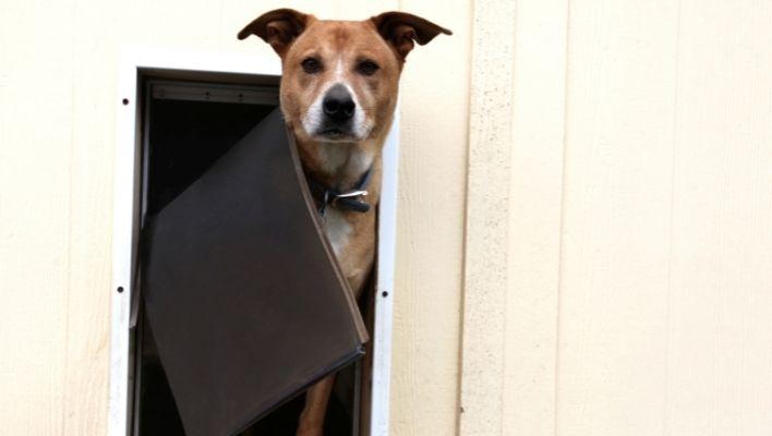 Bästa Hundlucka 2021 - Stort Test av Hundluckor