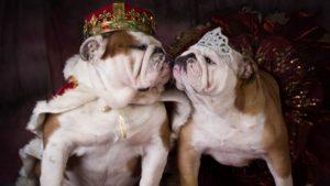 102 Lyxiga Hundnamn (för den eleganta hunden)