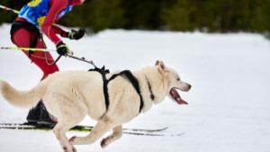 Bästa Midjebälte till Hund 2021 - Stort Test av Midjebälten